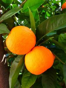 oranges-5383_1920